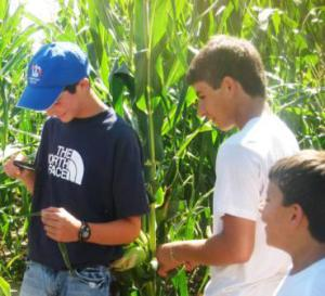 Youth in Crop Sciences Investigation (CSI) workshops learn about crop production and have the opportunity in investiage what pests might be present in the field.