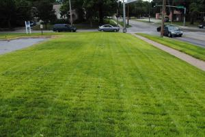 Off-colored Kentucky Bluegrass
