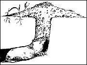 How a molehill is made. Photo courtesy extension.missouri.edu