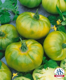 Tomato_Chef'sChoiceGreenF1-AAS2016-PRIMARY