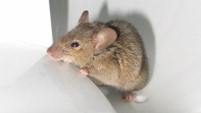 mousewasherx680