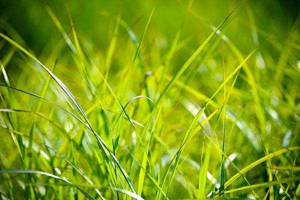 grass-1550025_1280 (1)
