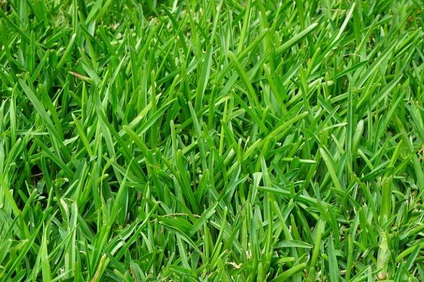 grass-375586_640